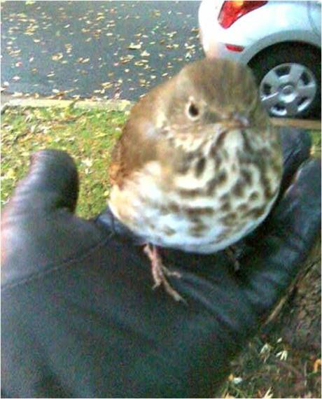 birdie1edited