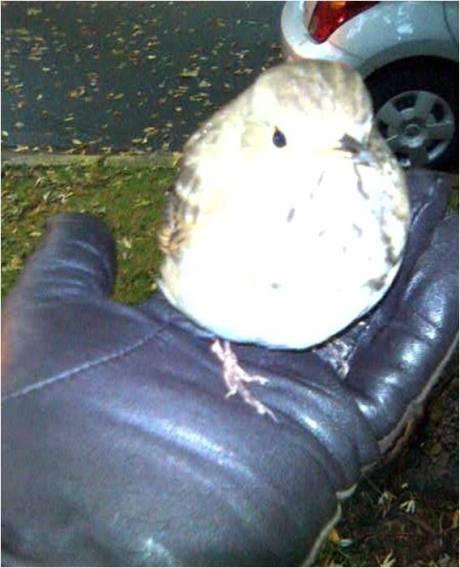 birdie2edited